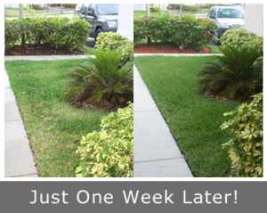 Our Denver CO sprinkler repair team restores lawn health